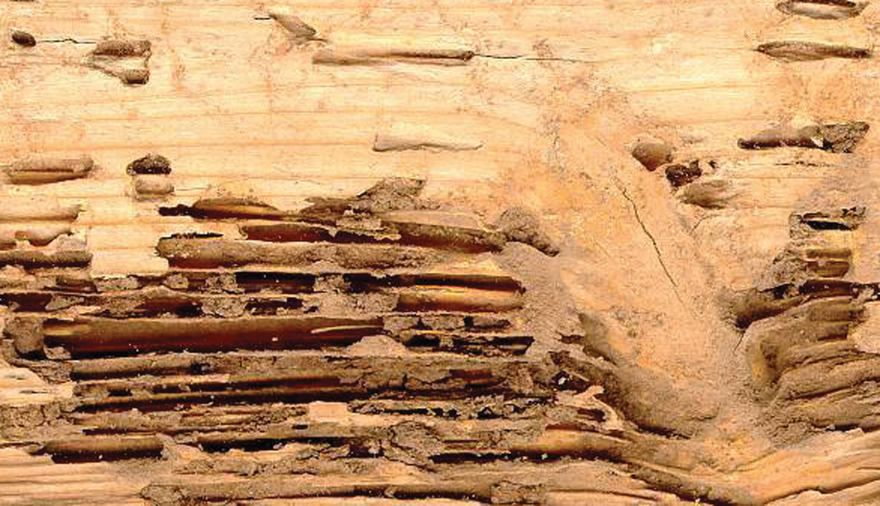 Wood Destroying Insect Reports | JB's Pest Control